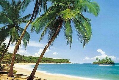 Photo Wallpaper Palms At The Beach Wall Mural 366x254cm Beach And Ocean