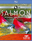 Nature: Salmon - Running the Gauntlet (Blu-ray Disc, 2011)