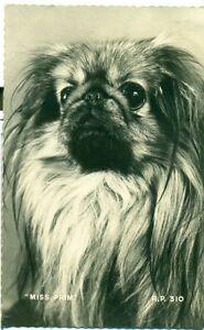 POSTCARD-DOGS-Miss-Prim
