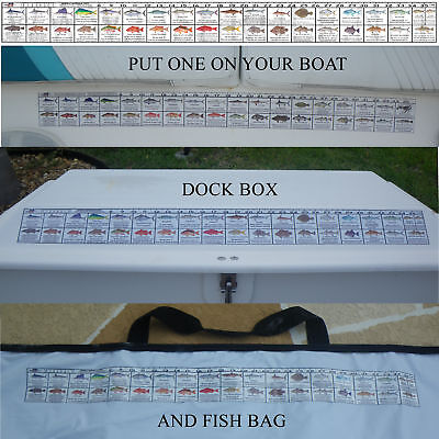 Georgia Saltwater Fishing Regulation Ruler Fish Decal