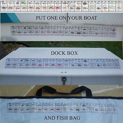 Georgia Saltwater Fishing Regulation Ruler Fish Decal