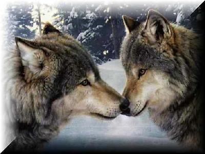 mjwolfhunter