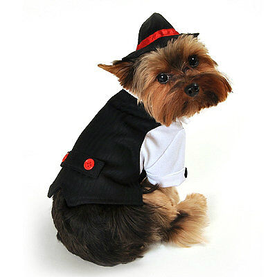 Your Guide to Buying Dog Costumes