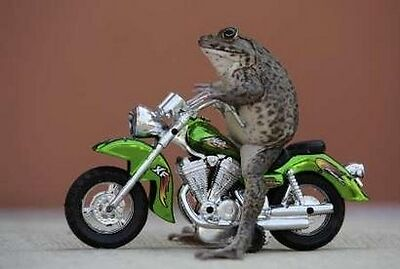 Freak Lizard Motorcycle Parts
