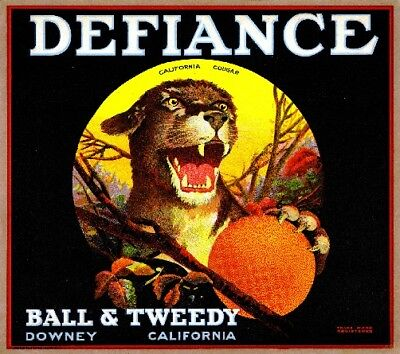 Downey Defiance Cougar Orange Citrus Fruit Crate Label Art Print