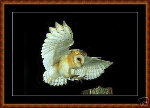 Counted-Cross-Stitch-Pattern-Barn-Owl-2