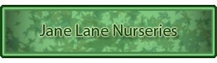 Jane Lane Nursery