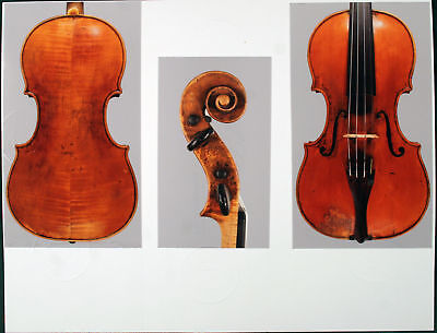 A rare, fine certified violin by Mathias Albani, 1675 on Rummage