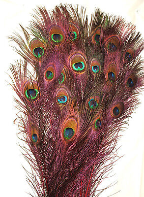 100 Peacock Feathers W Eyes Stem Dyed Red