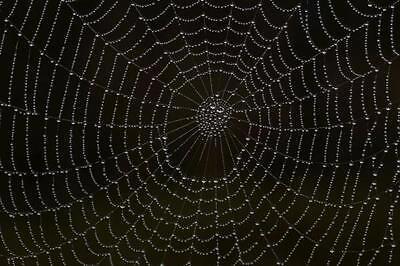 Cobweb's Cupboard