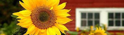 sunflowerhouse-OZ