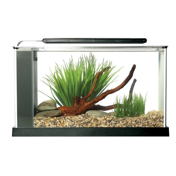The Ultimate Guide to Buying Plants for Your Aquarium