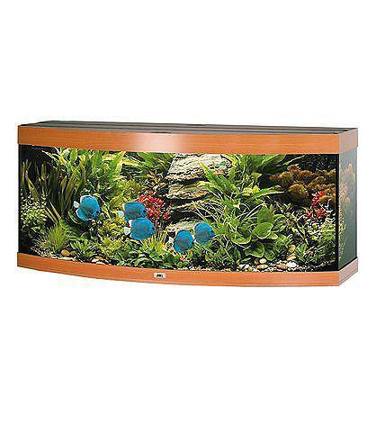 Ratgeber UV-C-Wasserklärer: gesunde Fische und ein algenfreies Aquarium durch UV-Strahlen
