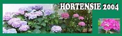 Hortensie2004