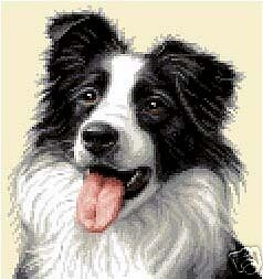 BORDER COLLIE dog complete counted cross stitch kit