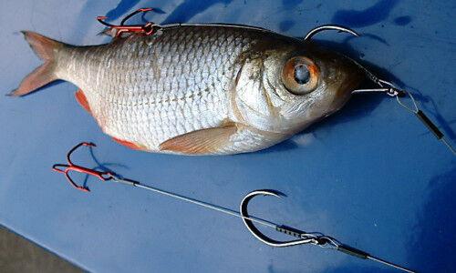 Engl. Raubfischsystem 7x7 Schleppsystem Köderfisch-System Zander Hecht Raubfisch