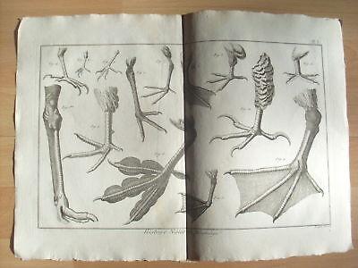 Kupferstich um 1800 Vögel Histoire Naturelle Bl 3