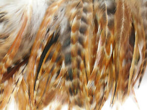 50+ GINGER BARRED CHINCHILLA GRIZZLY ROOSTER SADDLE FEATHER 5