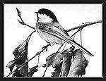 awildbird