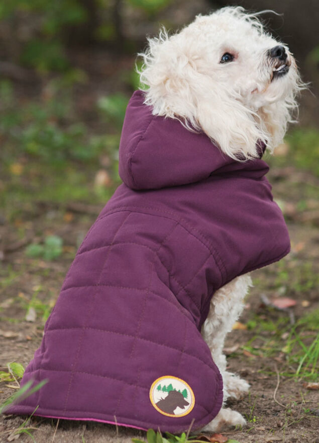 Quilted Dog Coat Buying Guide