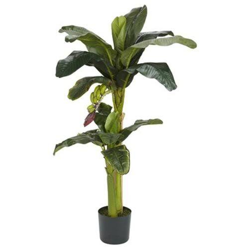 Einkaufsratgeber Bananenbäume auf eBay erstöbern