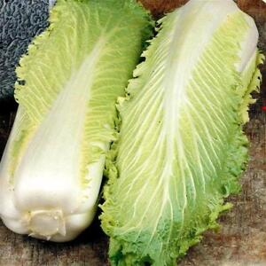 Chinese Cabbage MICHIHILI 100 Seeds (HEIRLOOM / ORGANIC)