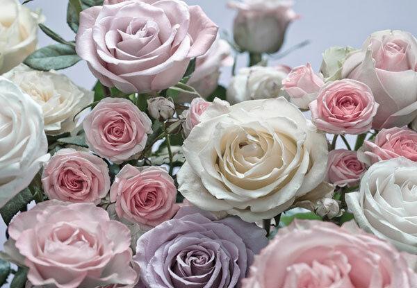 Fototapete Rosen Floral Blüten Blumen romantisch zart pastell 368x254 Koma 8-736