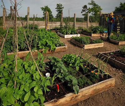 Gardening Vegetables Organic cd Horticulture 30 Books