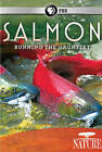 Nature: Salmon - Running the Gauntlet (DVD, 2011)