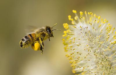 Maine Honeybee Market