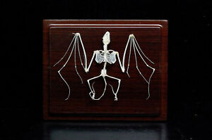 Farm/Countryside Real bat skeletons,taxidermy specimen good quality