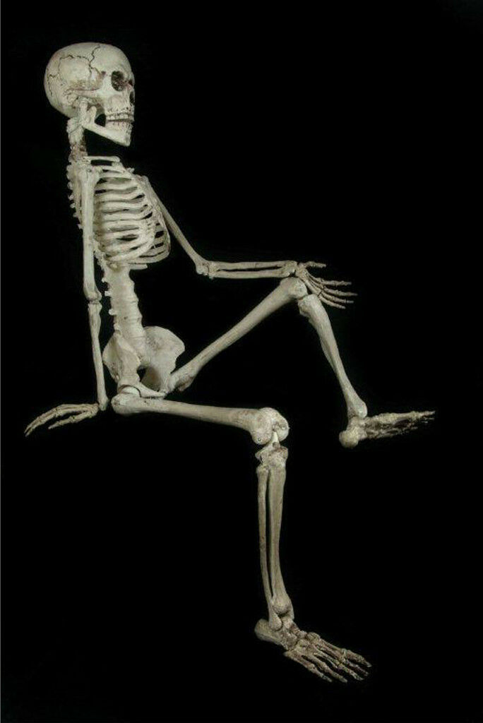 Life Size--barney Skeleton--human Skull Cheap Halloween Prop Building Decoration