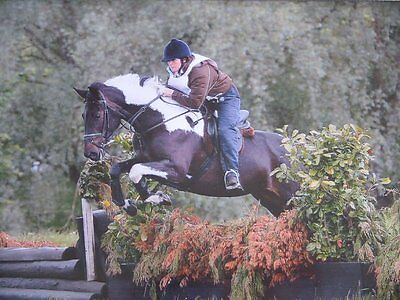 JEM Equestrian