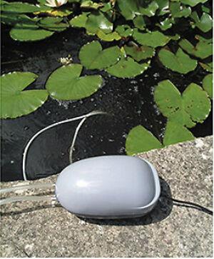 Ungetrübtes Vergnügen: So sorgen Sie mit einer Solarpumpe für klares Wasser