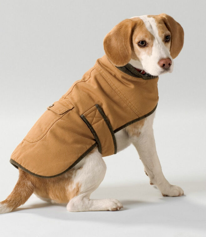How to Buy a Waterproof Coat for Your Dog