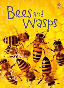 Bees-amp-Wasps-Usborne-Beginners-Beginners-Series
