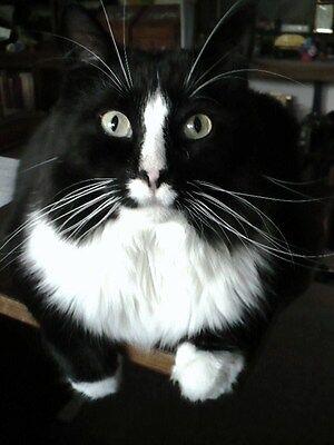 FAT CAT VINTAGE WRISTWATCHES