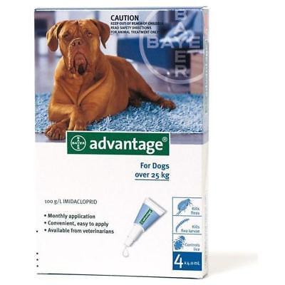 Einkaufsratgeber: Ungeziefer-Schutz für Ihren Hund