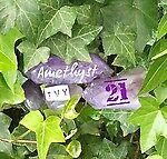 amethyst_ivy_21