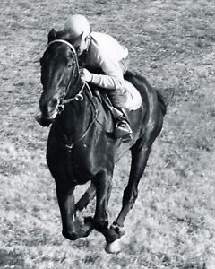 KELSO-HORSE-RACE-RACING-8X10-GLOSSY-B-W-PHOTO-1964-RARE