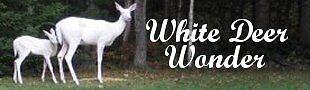 whitedeerwonder22