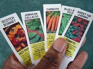 CaribbeanGarden