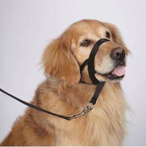 Head-Collar-No-Pull-Training-Dog-Headcollar-all-sizes