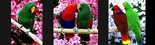 PrettyParrot for all Birds