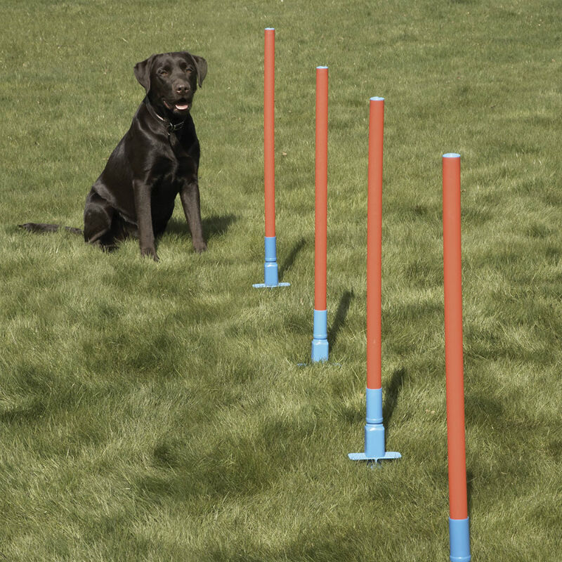 How to Buy Used Agility Equipment