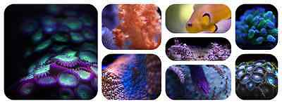 Exotic-Reefs