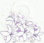 purple_lily_22