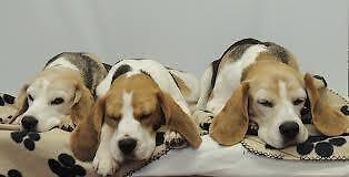 3 Dog Vintage