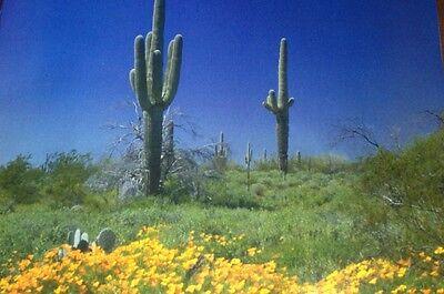 AZ Desert Blossoms