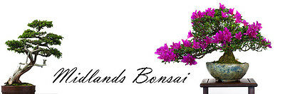 Midlands Bonsai